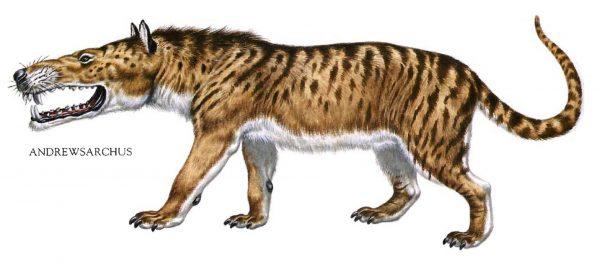 Эндрюсарх очень сильно внешне напоминает дикую смесь крысы и кабана, особенно если смотреть на его челюсти. Вид был описан только по единственному найденному фрагменту скелета – черепу