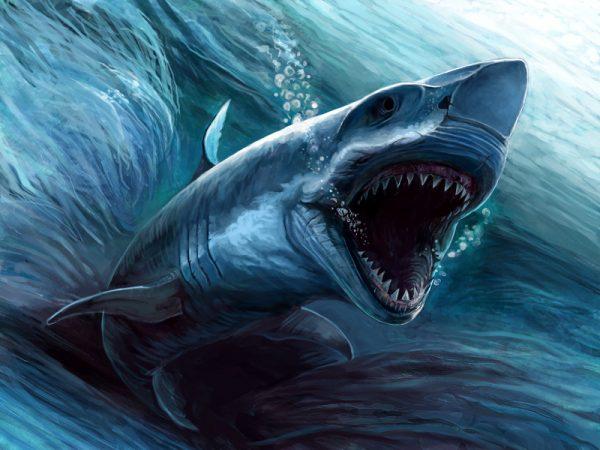Укус мегаладона был настолько силен, что мог легко проломить грудную клетку большого кита. Однако акула не ограничивалась только ими. Следы укусов мегалодона найдены на сотнях костяков самых разных морских животных